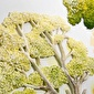 Vitale Vitale Doru Harbin Tablo Ağaçlar Renkli